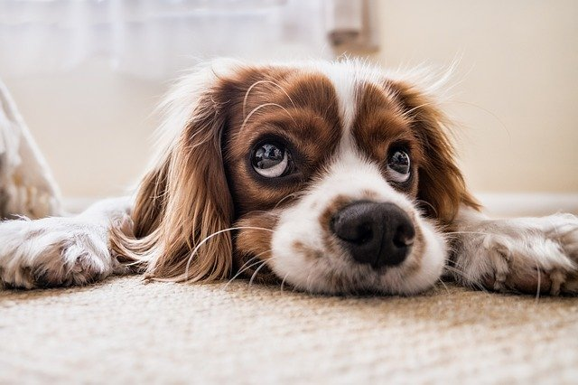 Eliminate Pet Odors In Your Home